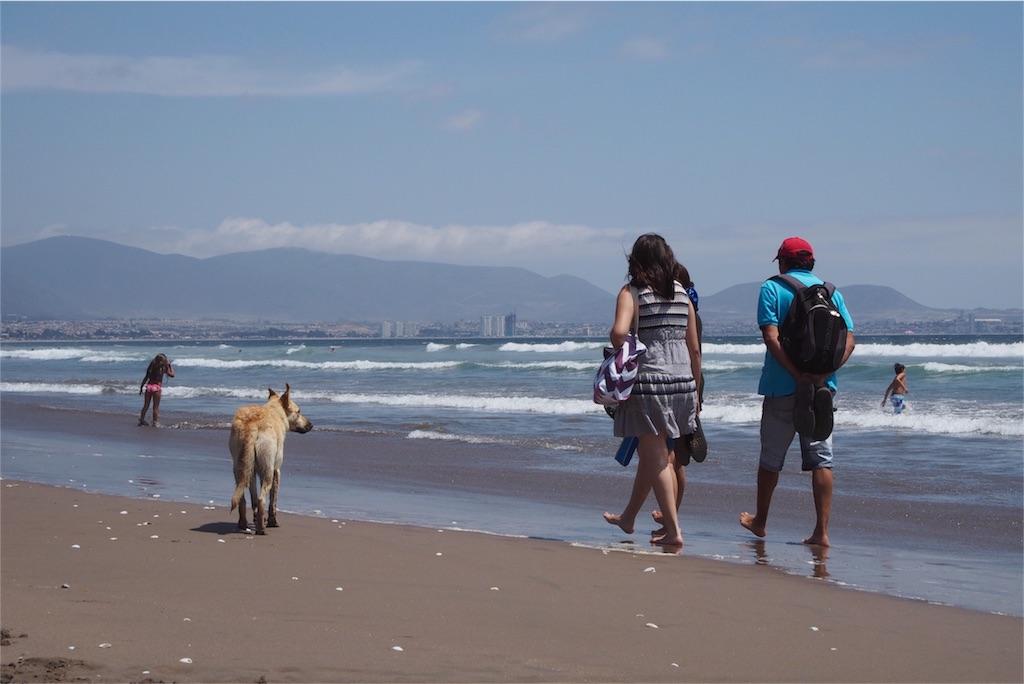 海沿いを人に寄り添って歩くわんこ