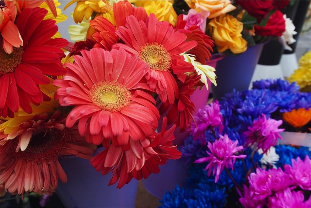 お花屋さんで見つけたカラフルなお花いろいろ