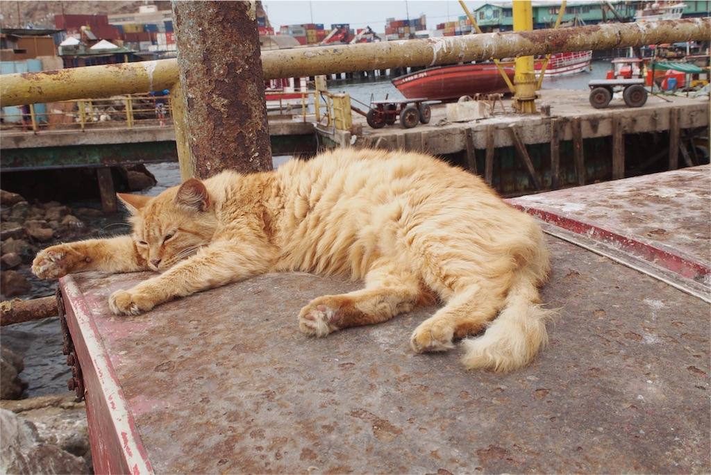 日向で気持ち良さそうに眠る猫
