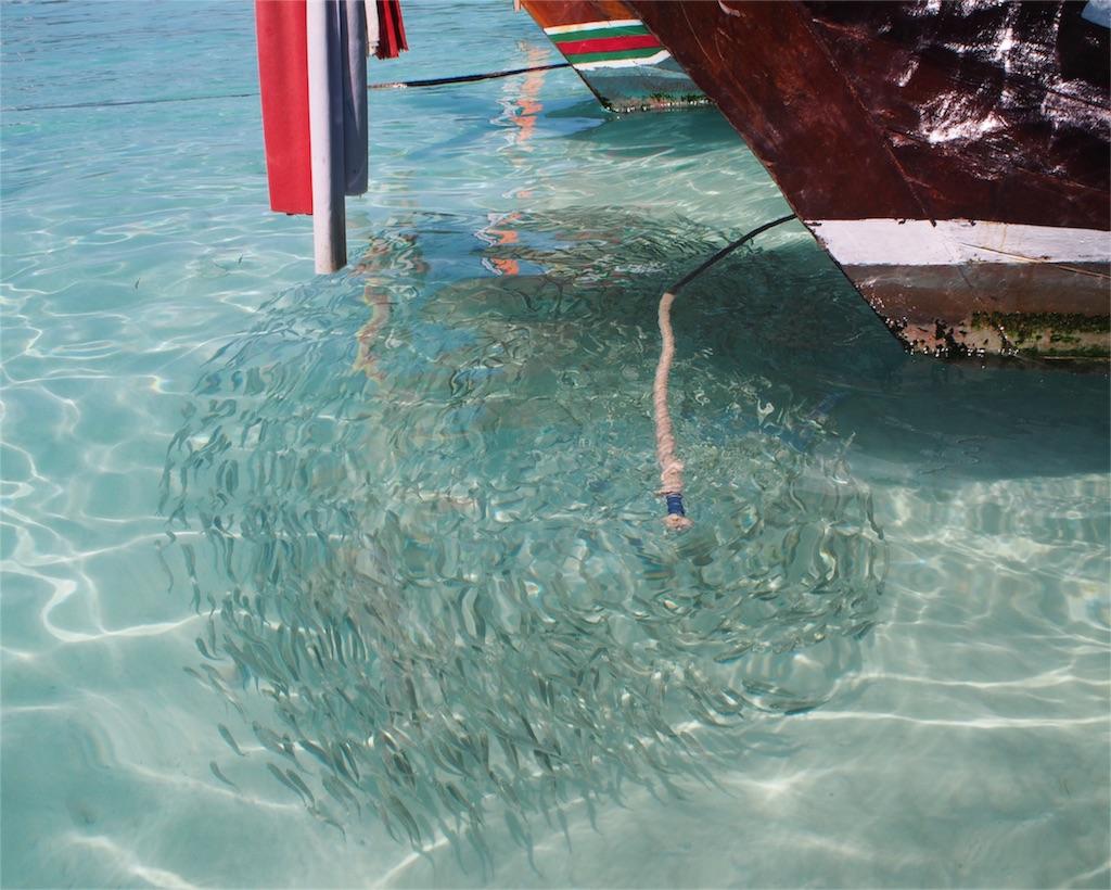小魚がくっきり見える透明感の海