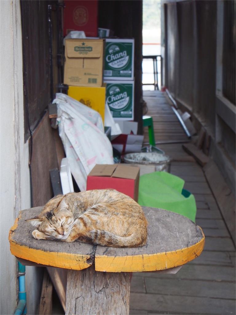 カフェの外ではネコがお昼寝中...