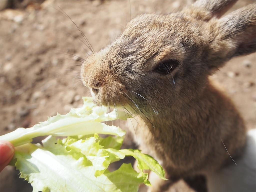 お野菜の誘惑にうさぎが寄ってくる