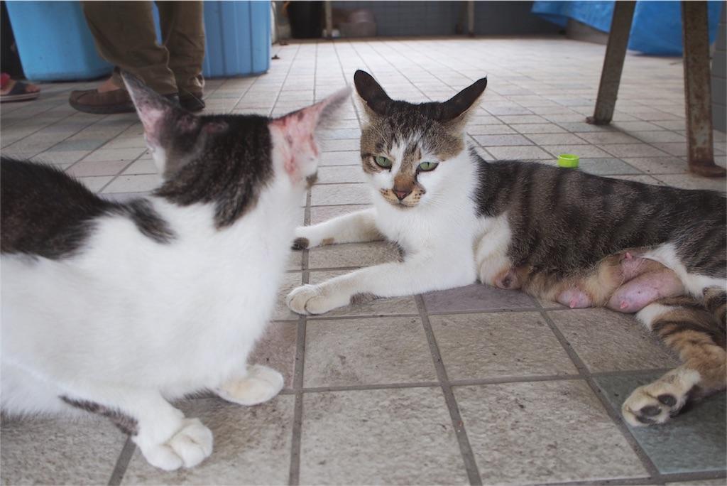 待合所でさっそく第一島猫発見