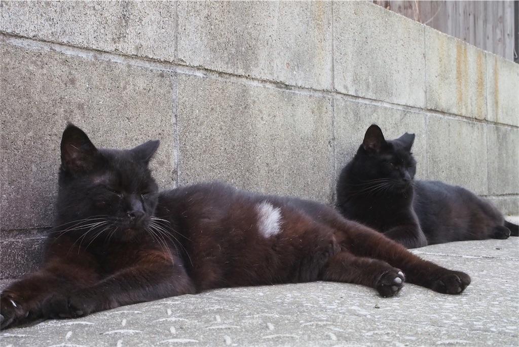 黒猫2匹でお昼寝中