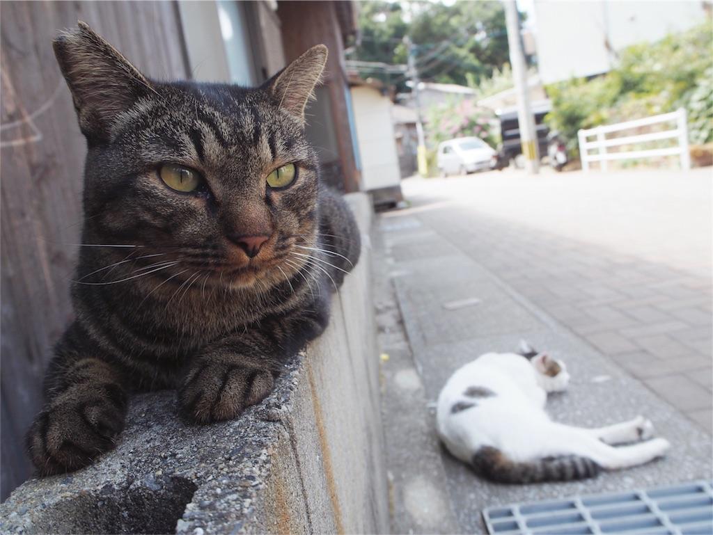 きりりとした顔立ちの猫