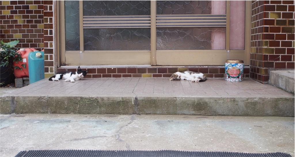 かわいい子猫もいました