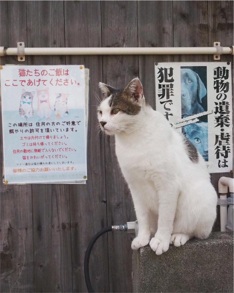 エサやり指定場所に貼られているポスター