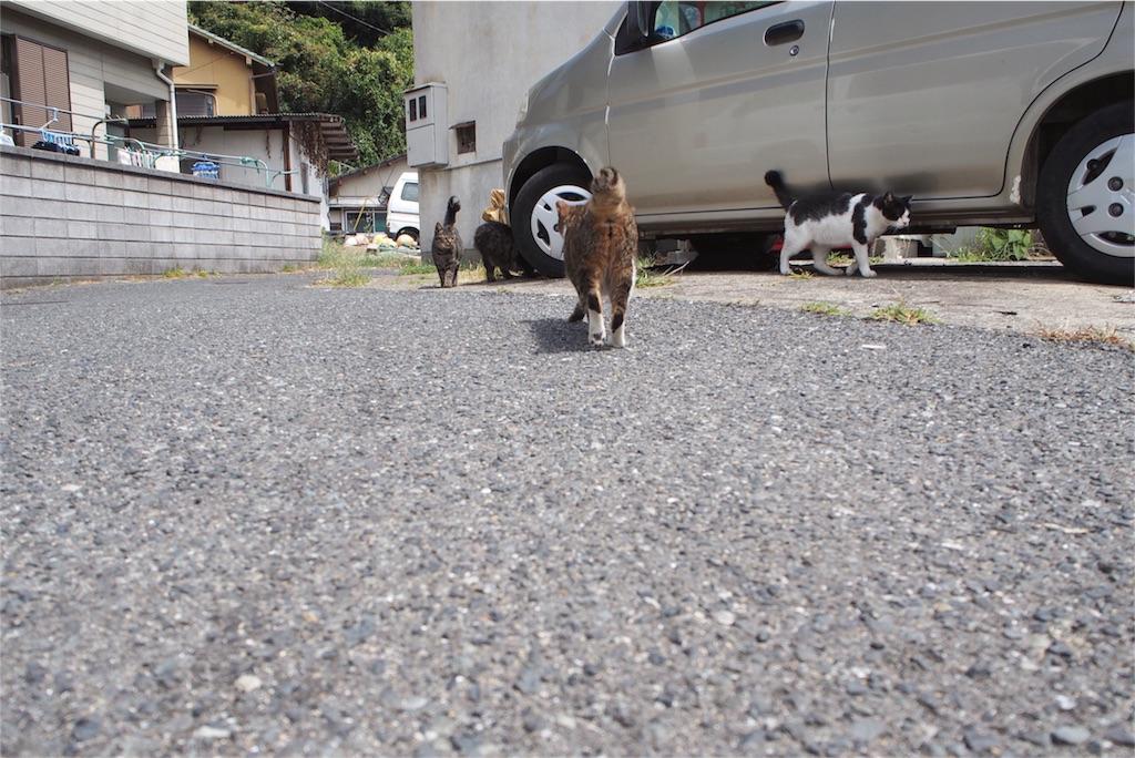 車の下から猫猫猫...