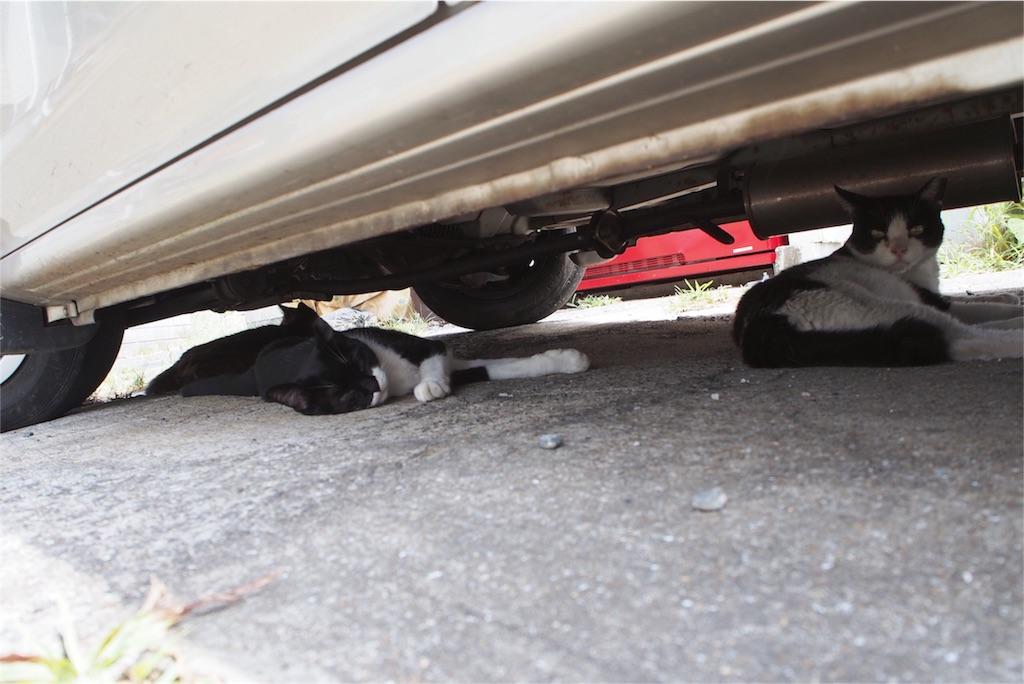 みんな車の下で涼んでいます