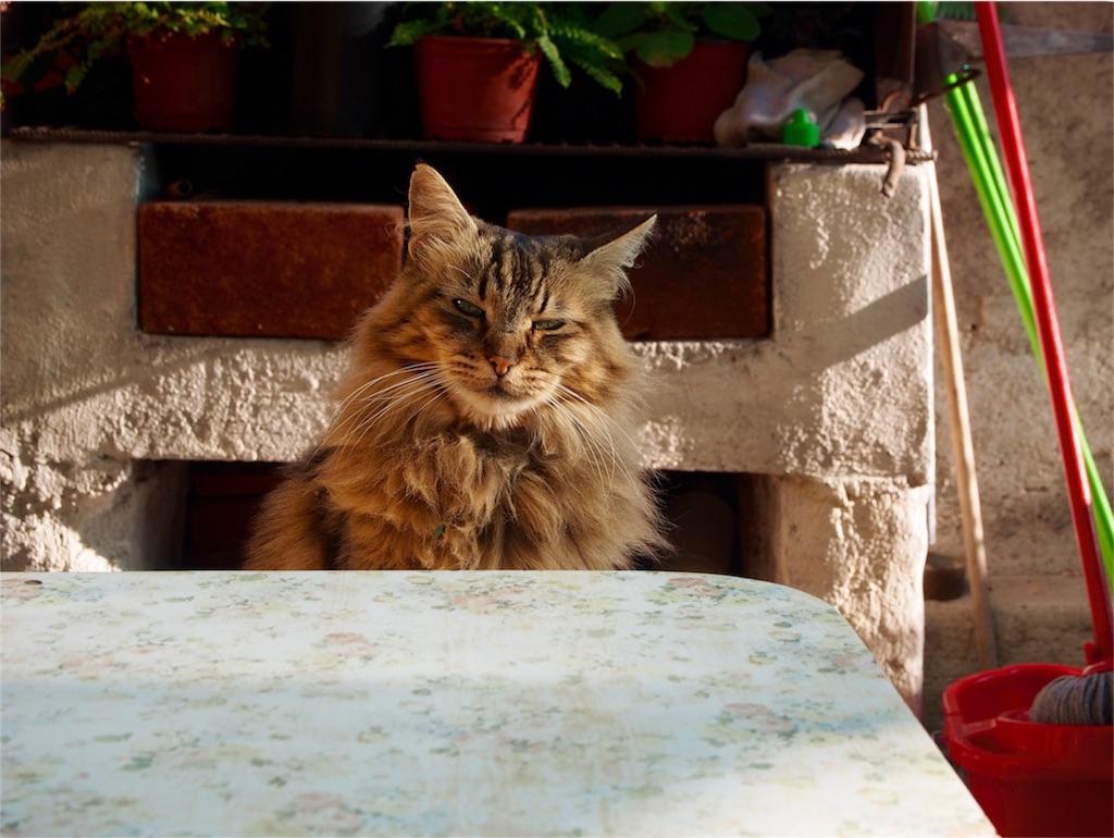 宿の猫しまさん
