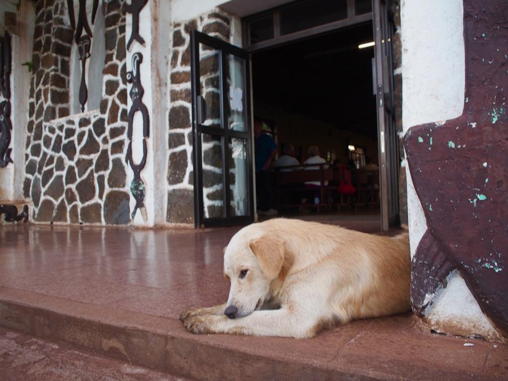 絶海の孤島の教会と犬
