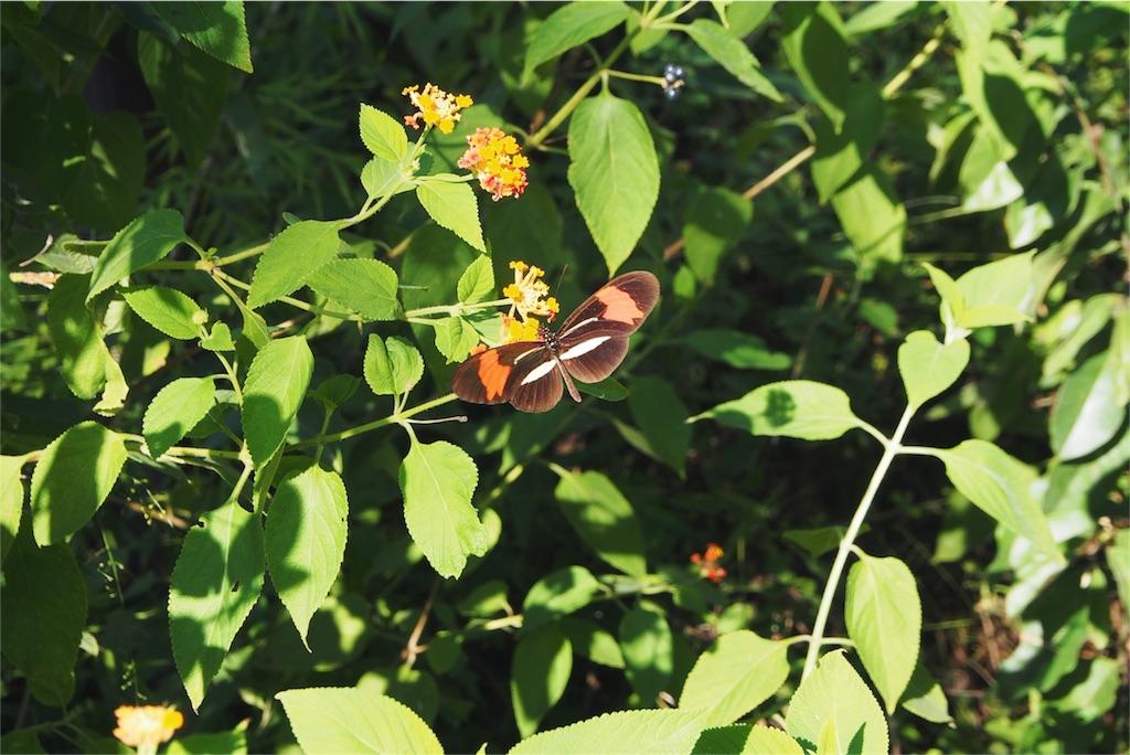 蝶もあちこちに飛んでいます
