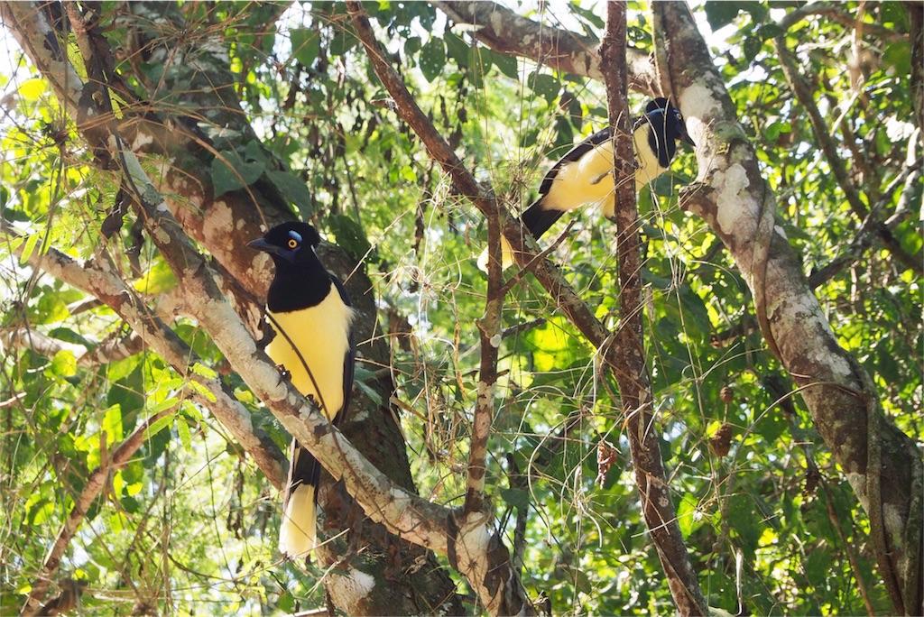 イグアス国立公園内には動物もたくさん