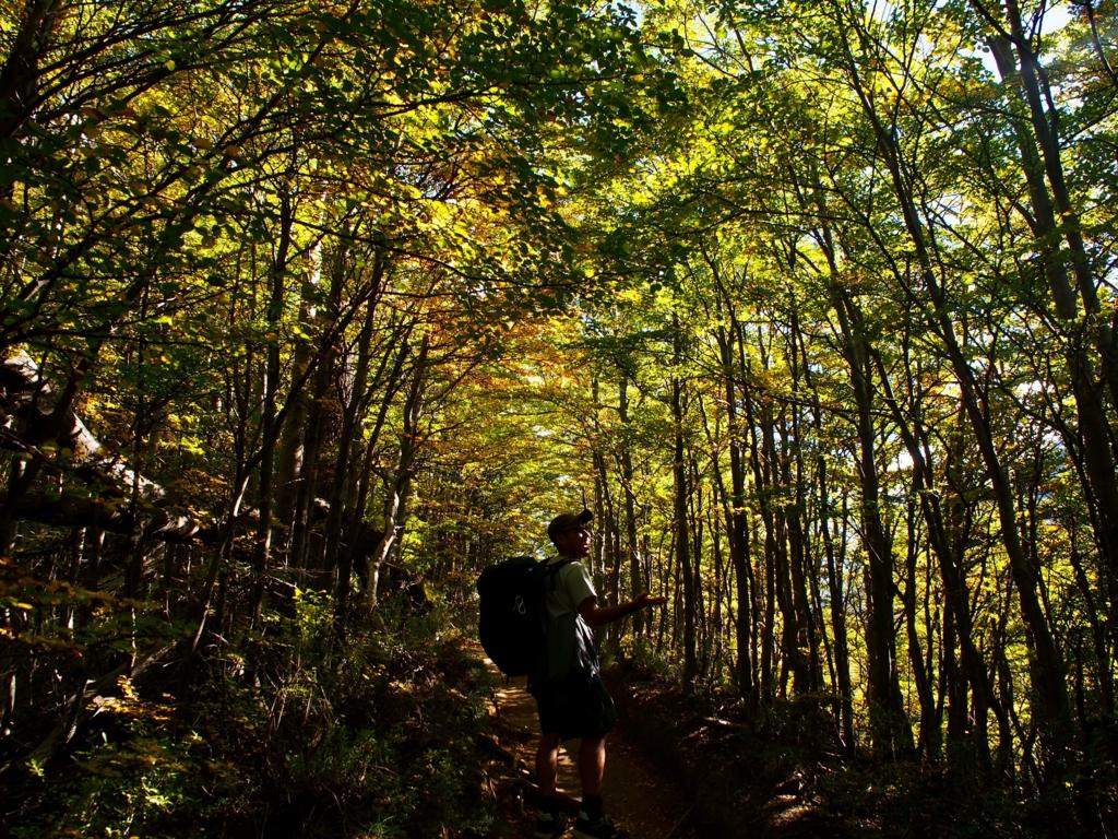 3月中旬のパイネ国立公園は紅葉してます