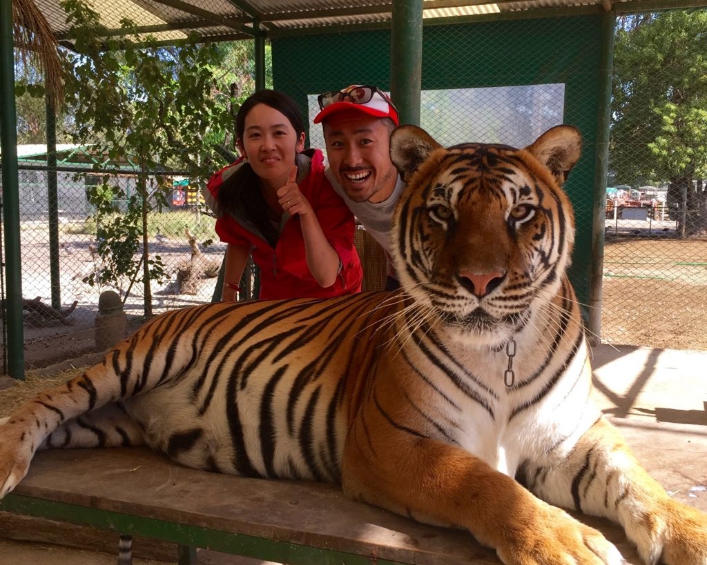 世界で一番危険な動物園でトラとスリーショット