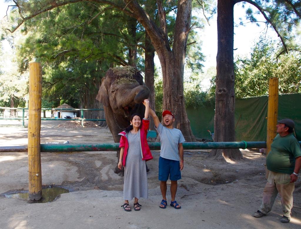 南米で象と戯れる