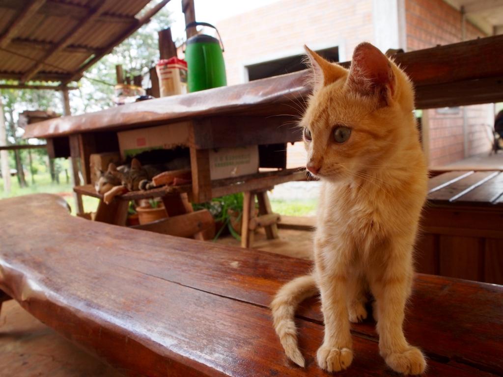 パラグアイで見つけた可愛い子猫