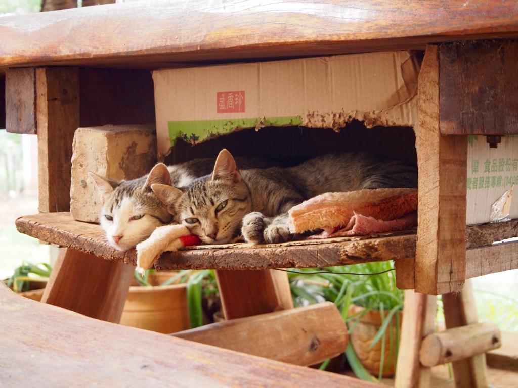 イグアス移住地のゆったり流れる時間を感じさせる子猫