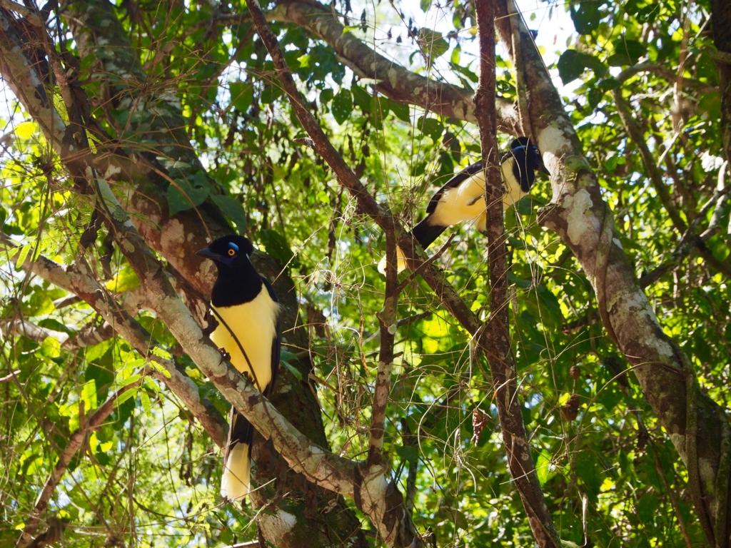 イグアス国立公園内nのカラフルな鳥