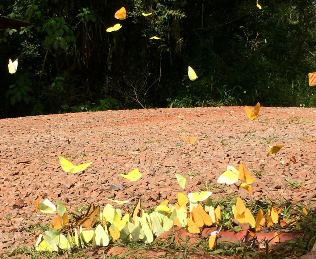 世界三大瀑布 イグアスの蝶々