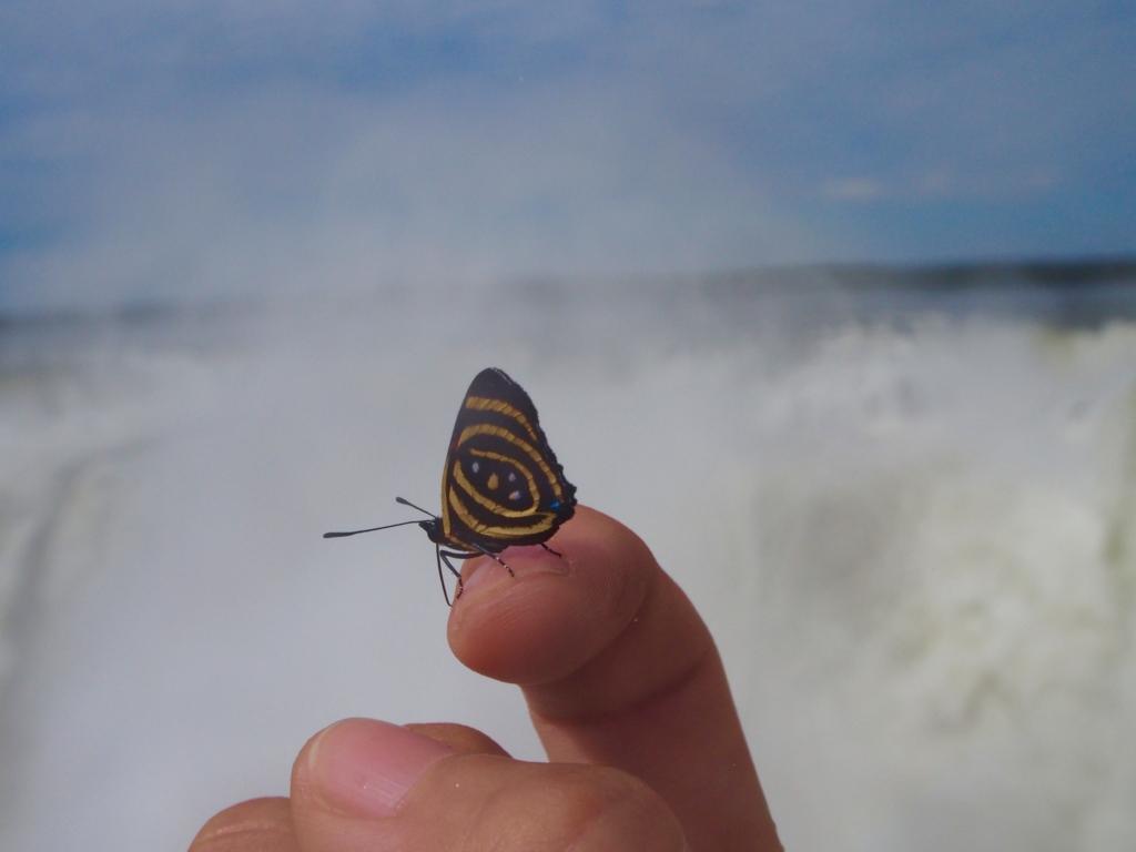 悪魔の喉笛と蝶々