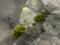 201405_知恩院の岩に苔