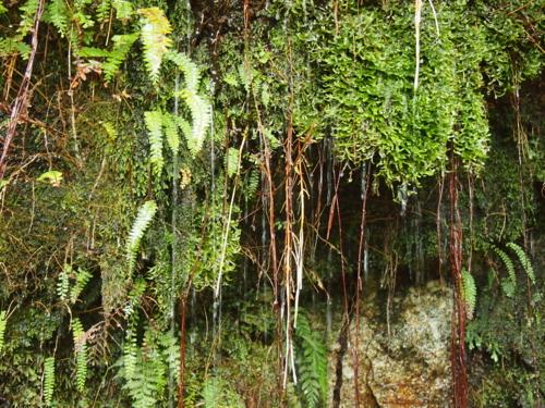 201408_屋久島苔と水