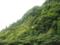 201408_屋久島荒川登山口から見上げる