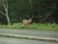 201508_知床バスの車窓から鹿