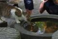 京都新聞写真コンテスト 哲学の猫