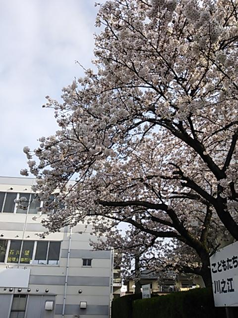 f:id:ehime-shogai:20130330082753j:image:w360:left