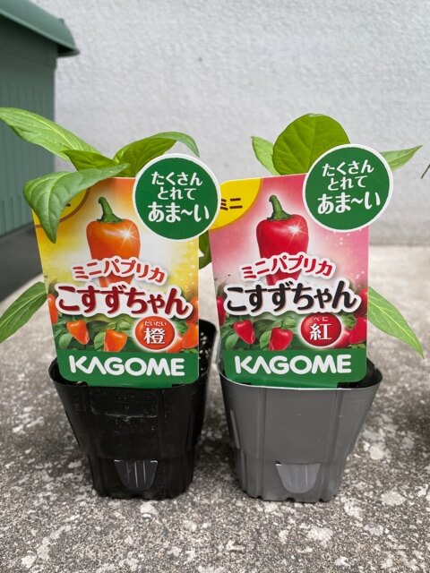 f:id:ehondaisukihinamama:20210502210023j:plain