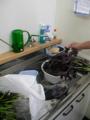梅干に使うシソの葉