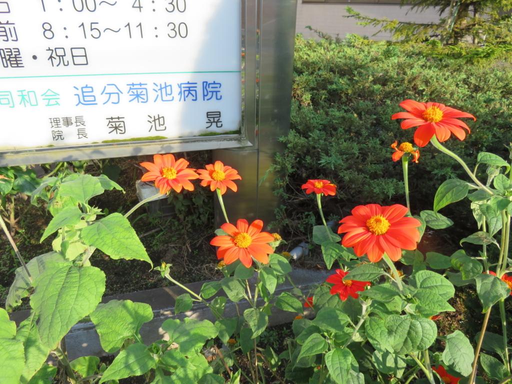 f:id:eiji-chan:20180827154808j:plain