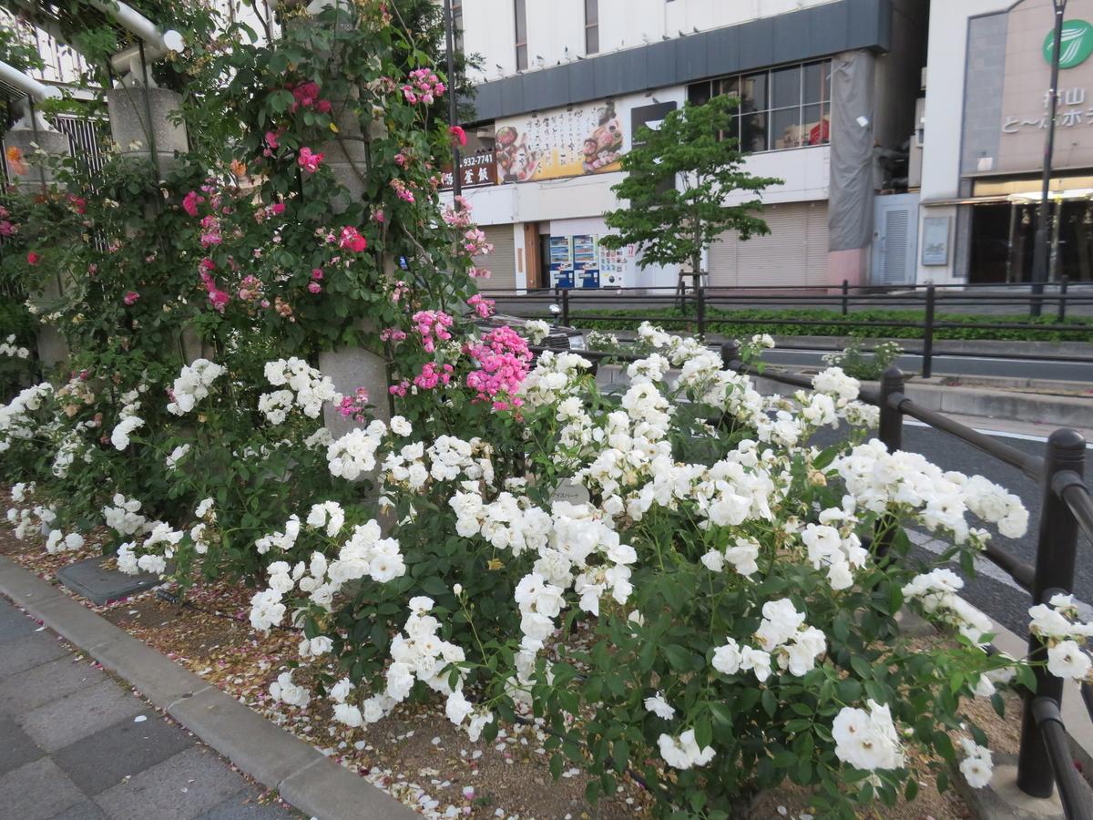 f:id:eiji-chan:20190604184557j:plain
