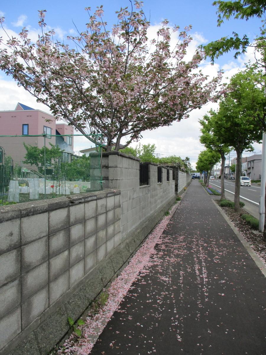 f:id:eiji-chan:20200531212250j:plain