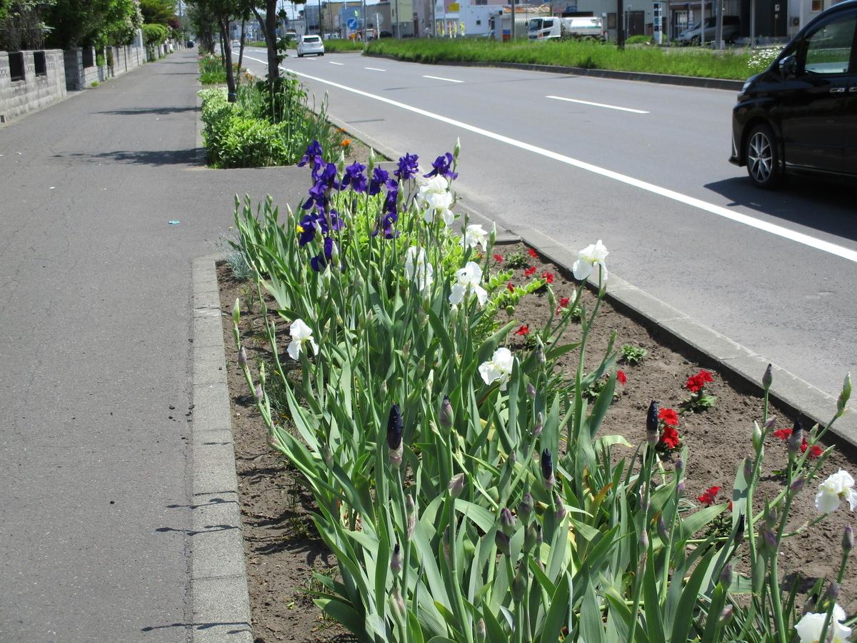 f:id:eiji-chan:20200605210821j:plain