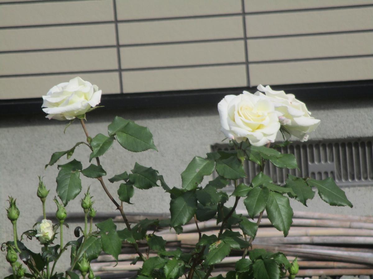 f:id:eiji-chan:20200616152452j:plain