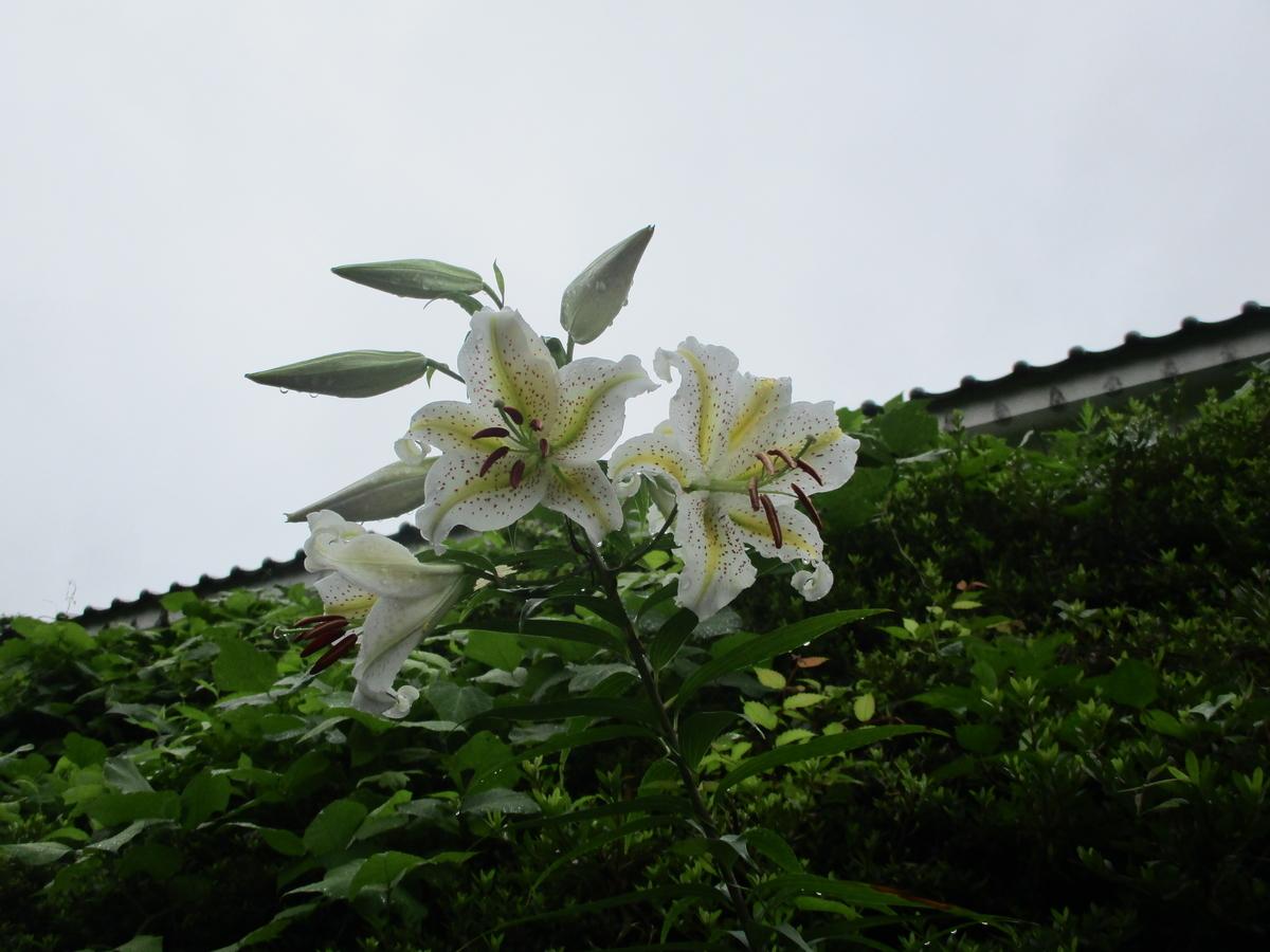 f:id:eiji-chan:20200716171000j:plain