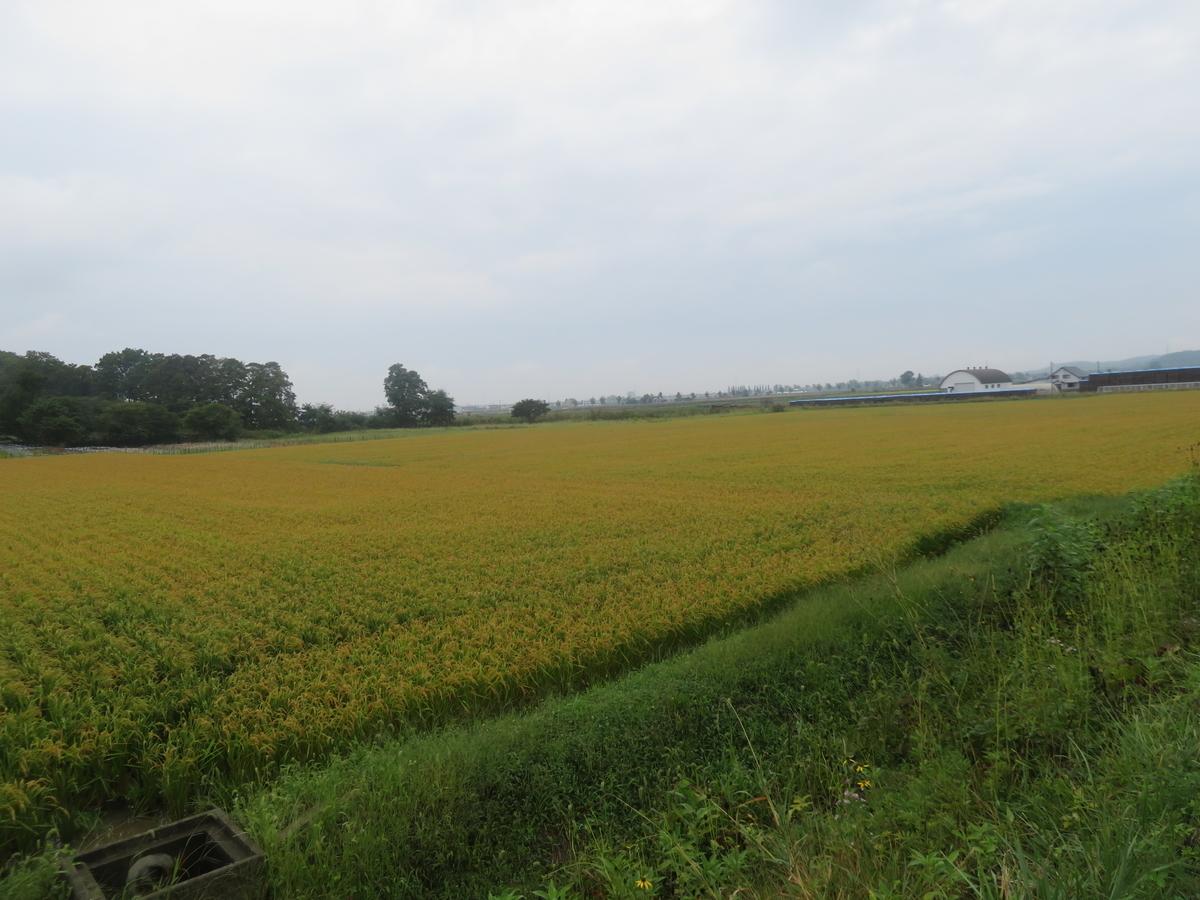 f:id:eiji-chan:20200910165557j:plain
