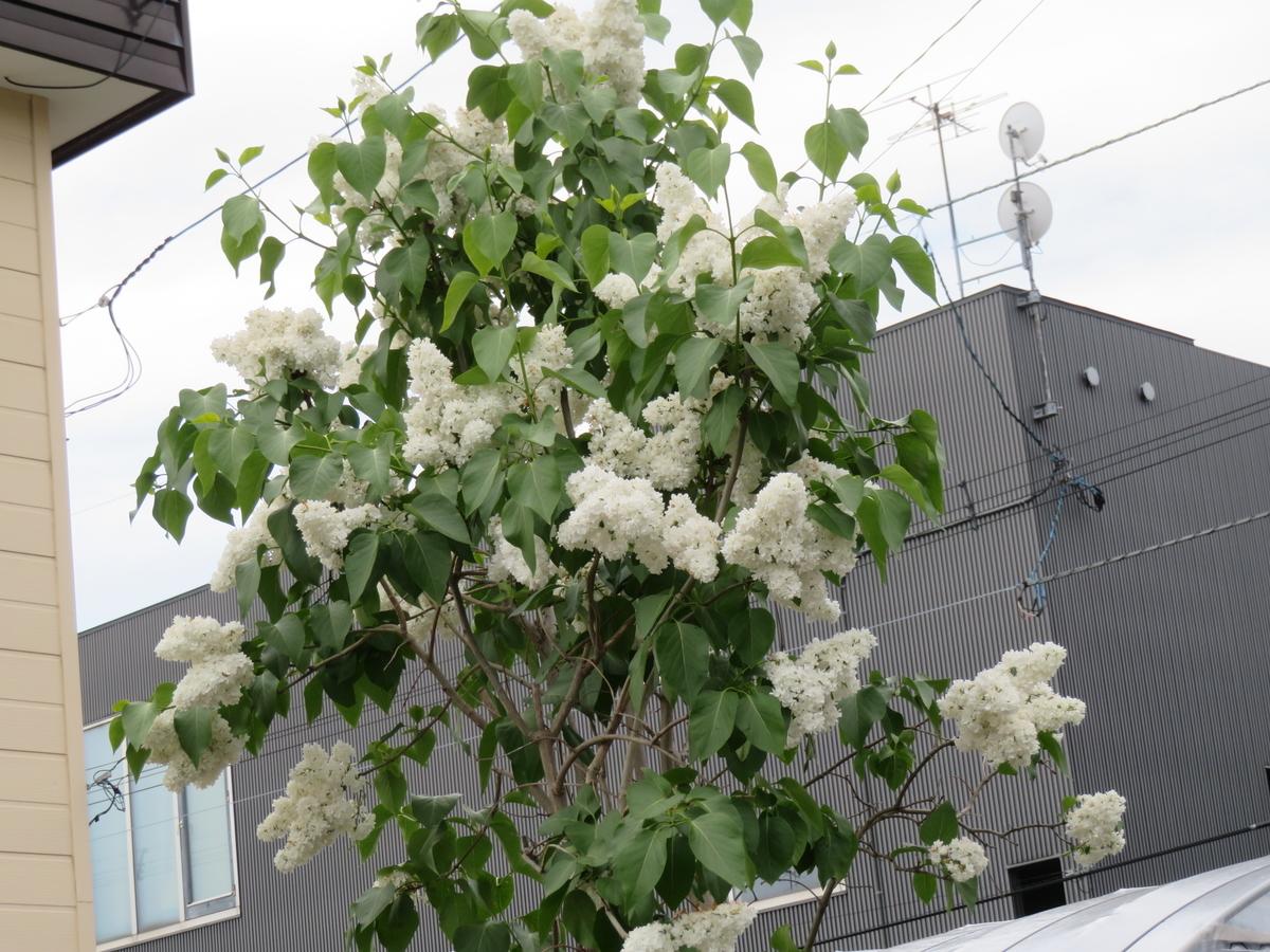 f:id:eiji-chan:20210607081617j:plain