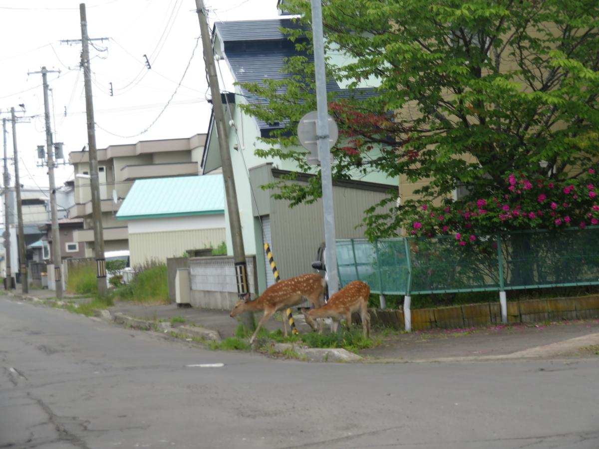 f:id:eiji-chan:20210709170337j:plain