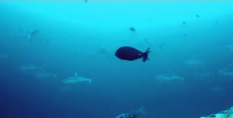 f:id:eiko-maldives:20161208021148j:plain