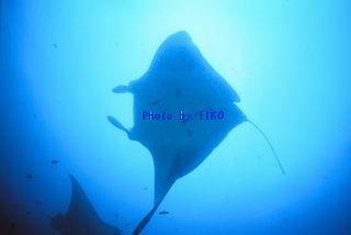 f:id:eiko-maldives:20170209184541j:plain