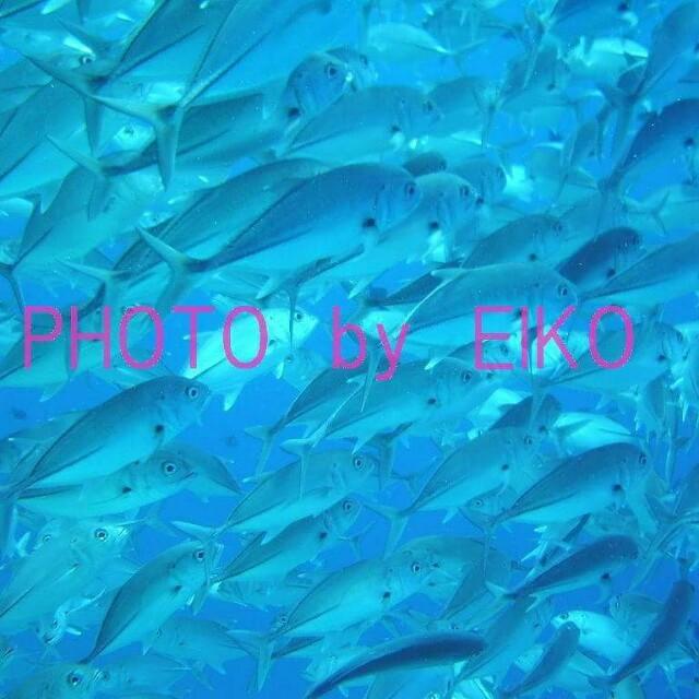 f:id:eiko-maldives:20170503221902j:image