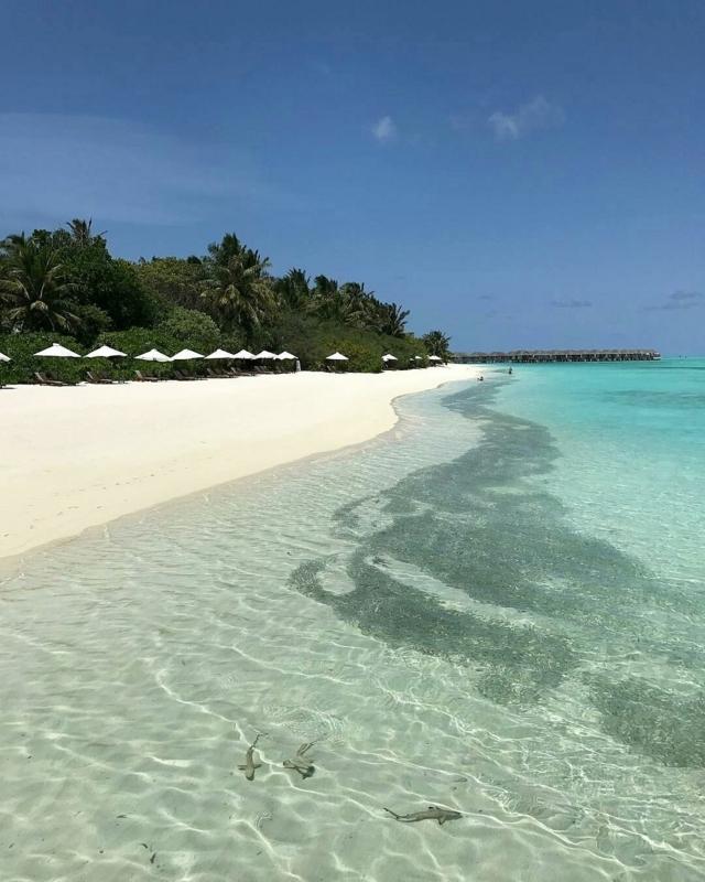 f:id:eiko-maldives:20170829014653j:plain