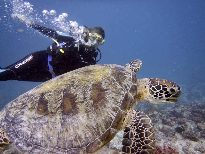 f:id:eiko-maldives:20171004013113j:plain