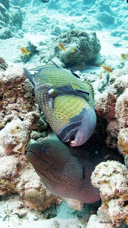f:id:eiko-maldives:20180214011847j:plain
