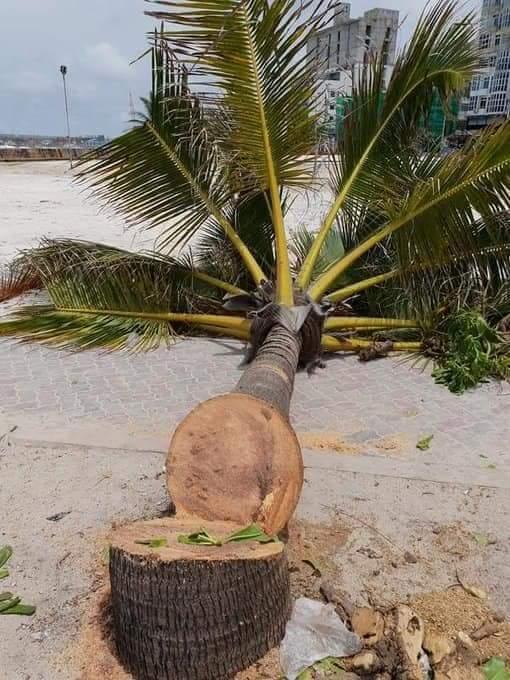 f:id:eiko-maldives:20180901011929j:plain