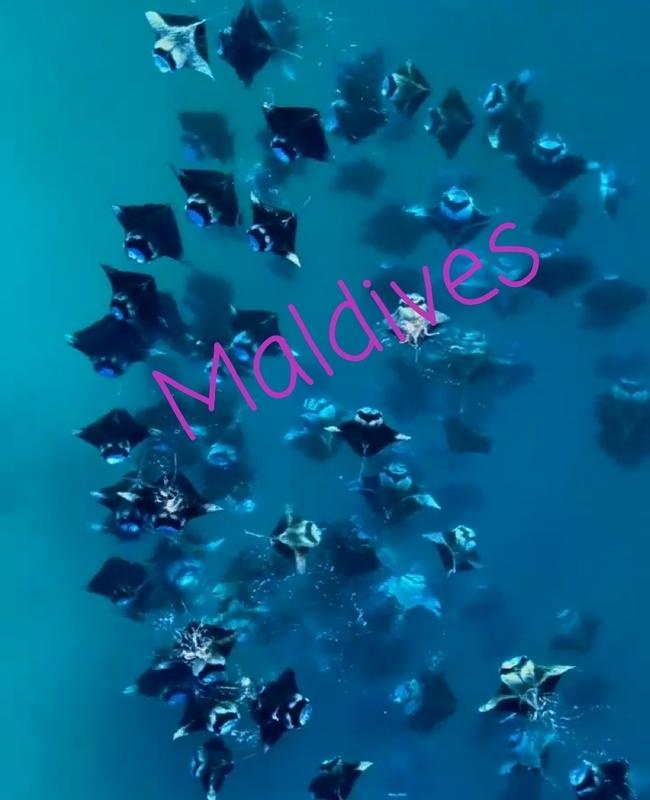 f:id:eiko-maldives:20181208015340j:plain